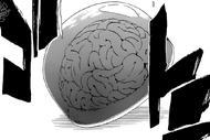 R579 Mózg