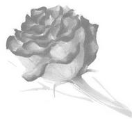 Volume 36 Intro Image