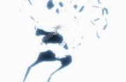 Yamamoto melibas Wonderweiss
