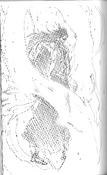 Kenpachi novela