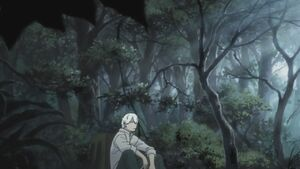 Ginko in forest