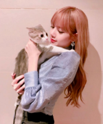 Lisa IG Update 180701 2