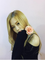 Rosé with a rose1