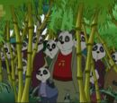 The Panda Colony