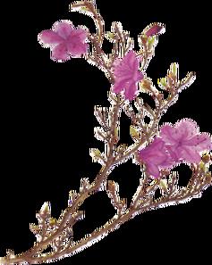 Pink flower png by desperatedeceit-d30dgz2