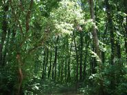 1024px-Forest ialoveni