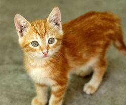 Kitten90