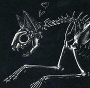 Cat skeleton by clickclack
