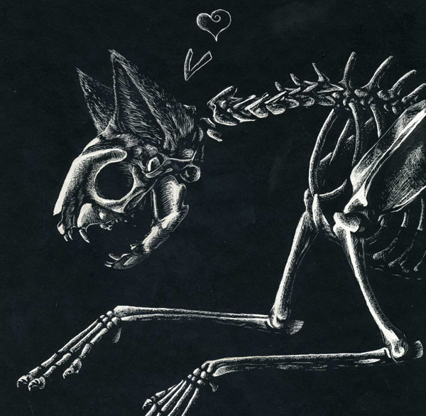 cat skeleton by clickclack jpg