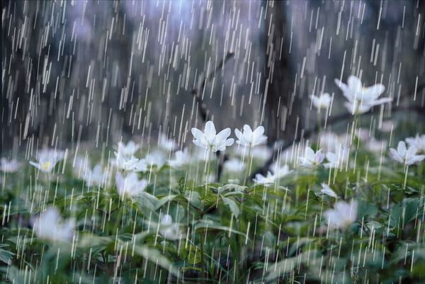 Raindrops-plants-smell.jpg.653x0 q80 crop-smart