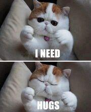 Cat-needs-hugs