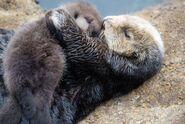 Ottercuddles2