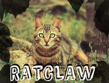 Ratclaw1