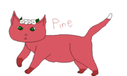 Pineblossen Warrior Cats request