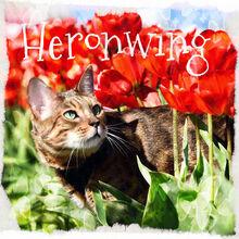 Heronwing3