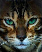7bcc990642a8f3fdd4b026c587e61509--amazing-eyes-gorgeous-eyes