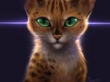 Cheetahpaw/flight