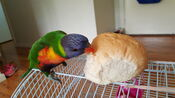 Lugia eats bread