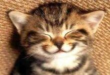 Happy kitty