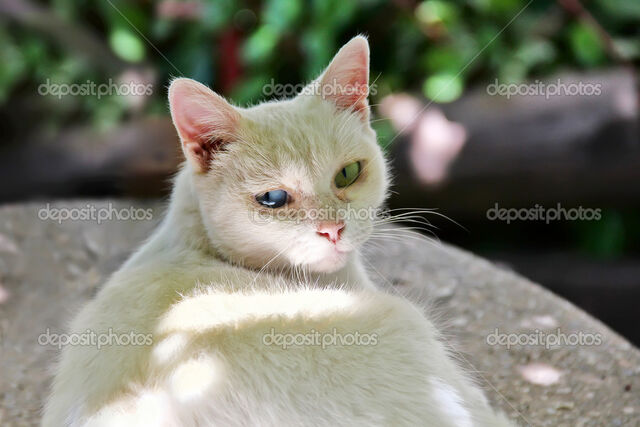 File:Depositphotos 9618275-White-cat-blue-and-green-eyes.jpg
