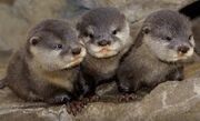 Otter!!!!!!!!!!!!!!!!!!!!! YAY