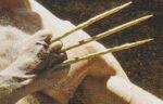 Bone Claws