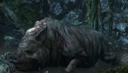 Big pig №5