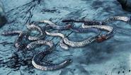 Parasite Larva №1