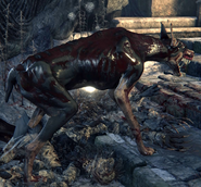Old Hunter's Hound №1
