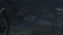 Forbidden Woods 1