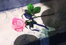 Hajis rose