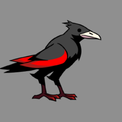Rayne's crow form
