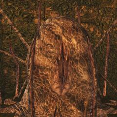 Maraisreq nest