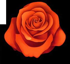 Flowerredbloom