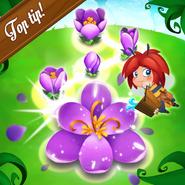 FlowerBloom-TopTip