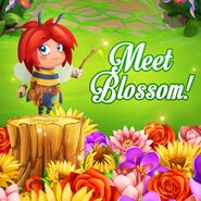 Meet Blossom