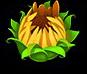 Floweryellow5