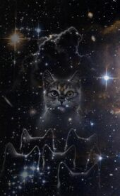 StarryCats