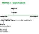 Alexander Marrone