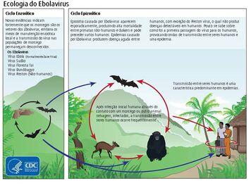 Ciclo do ebola-0
