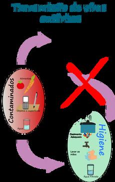 Ciclo enterofinal