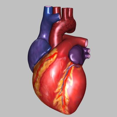 File:Hjertet.jpg