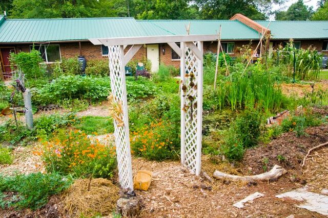 File:Bog garden.jpg