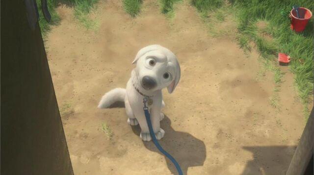 File:Bolt's dog face.jpg