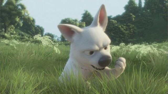 File:Bolt looking at his paw.jpg