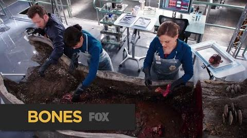 "BONES The Tree Victim from ""The Psychic in the Soup"" FOX BROADCASTING"