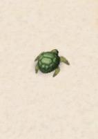 Ice Turtle 030116