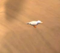 Ice Seagull 030116