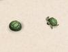 Tiere Schildkroete