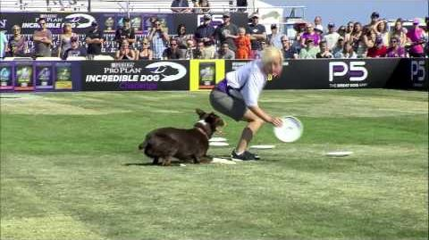Flying Disc 1st Place - Incredible Dog Challenge 2015 Huntington Beach, CA